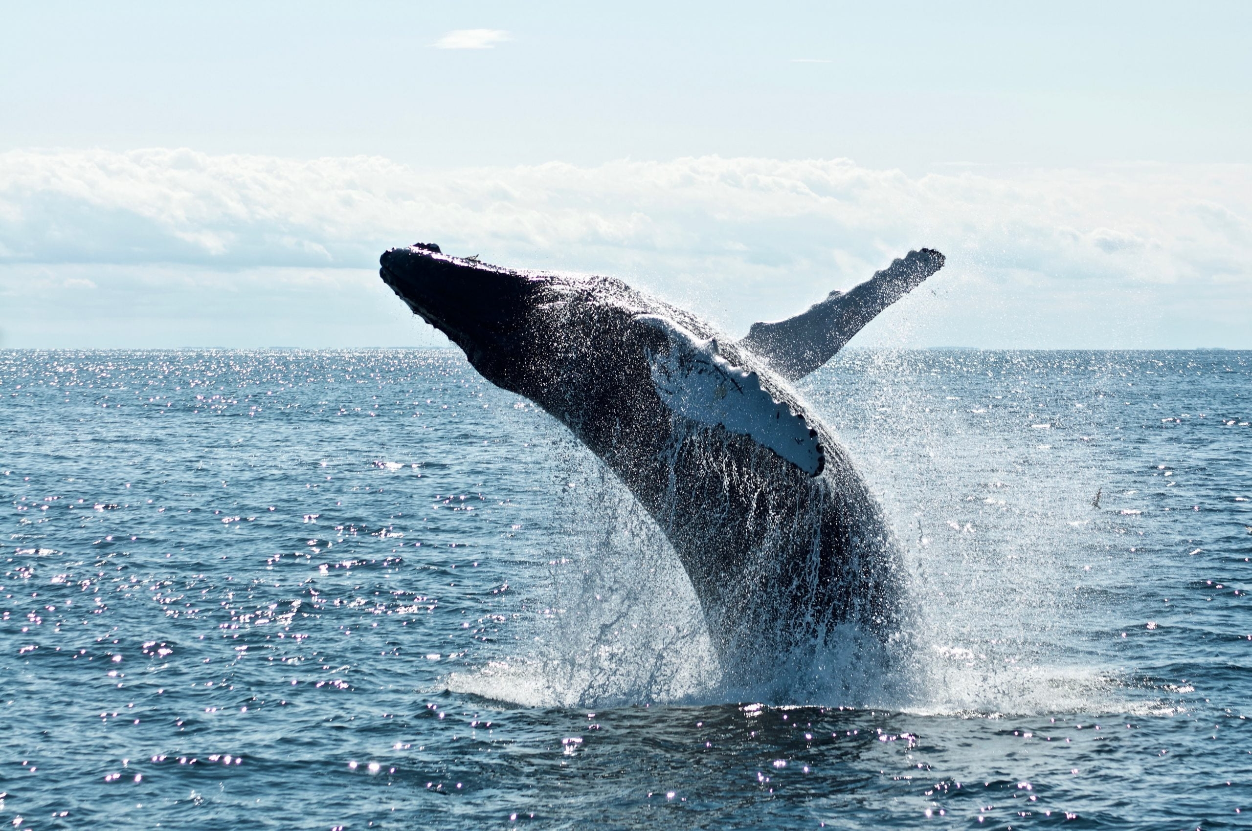 Indicator Shows Whale Selling Pressure on Bitcoin is Growing; What This Means