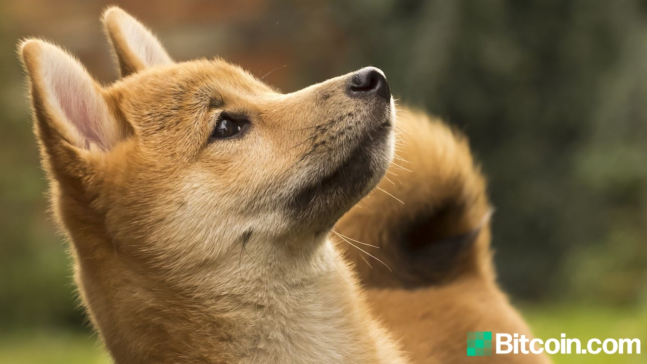 A Mysterious Dogecoin Address Absorbed 27% of the Supply, the Top 20 Addresses Captured 50% – Altcoins Bitcoin News